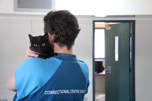 Gatos en prisión. Animales en Prisión. Segundaparte.